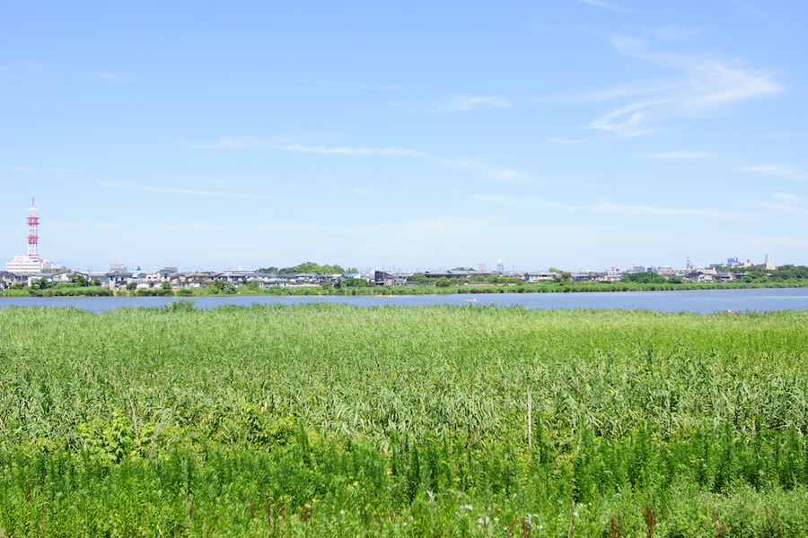 鳥屋野潟の水辺について   TOYANOGATA.JP ~潟と人がともに暮らす水辺の ...